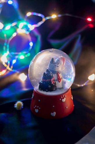 fitkot wesołych świąt
